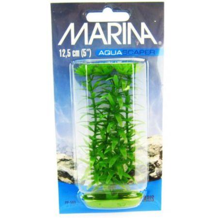 Marina Marina Aquascaper Anacharis Plant