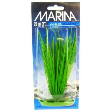 Marina Hairgrass Plant alternate view 2