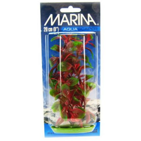Marina Red Ludwigia Plant alternate view 2