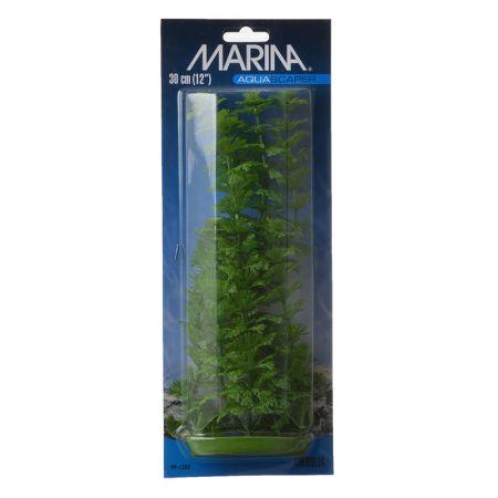 Marina Marina Aquascaper Ambulia Plant