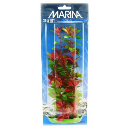 Marina Red Ludwigia Plant alternate view 3