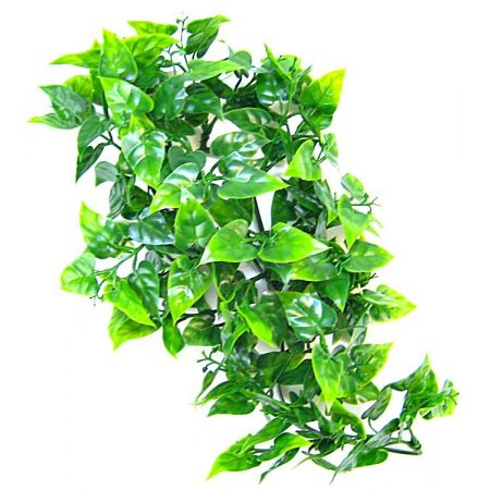 Zoo Med Zoo Med Natural Bush - Mexican Phyllo Aquarium Plant