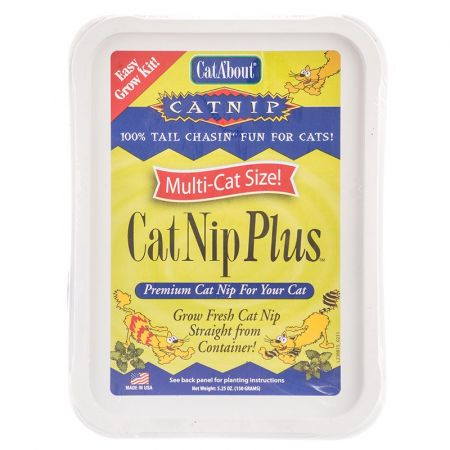 Gimborne CatA'bout CatNip Plus Easy Grow Kit