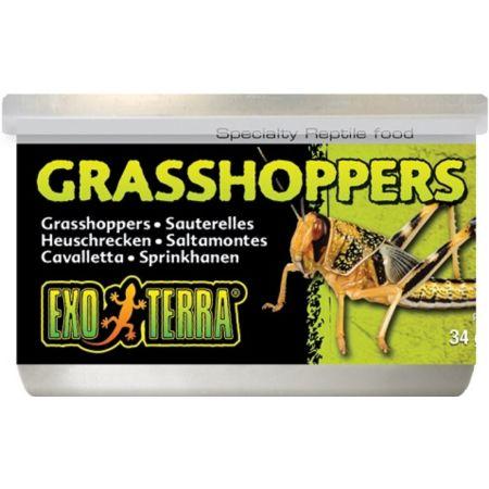 Exo-Terra Exo-Terra Grasshoppers Reptile Food