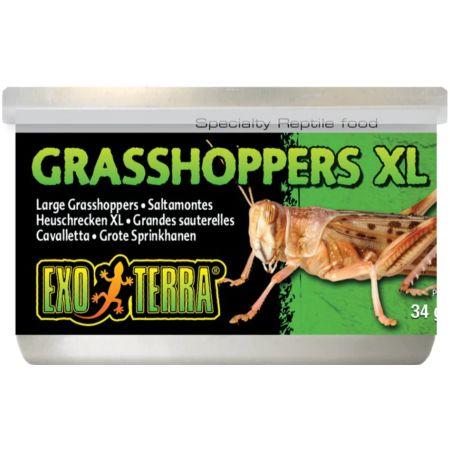 Exo-Terra Exo-Terra Grasshoppers XL